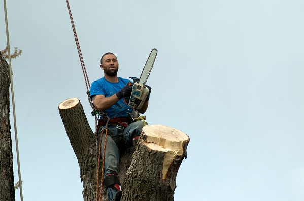 Seattle Tree Service