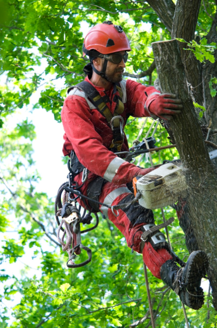 City Tree Service Seattle